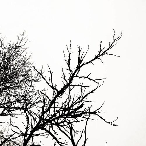 #лютий— цетріщини голого гілля під небом без кольору