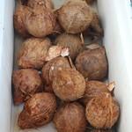 Cocos nucifera nuts