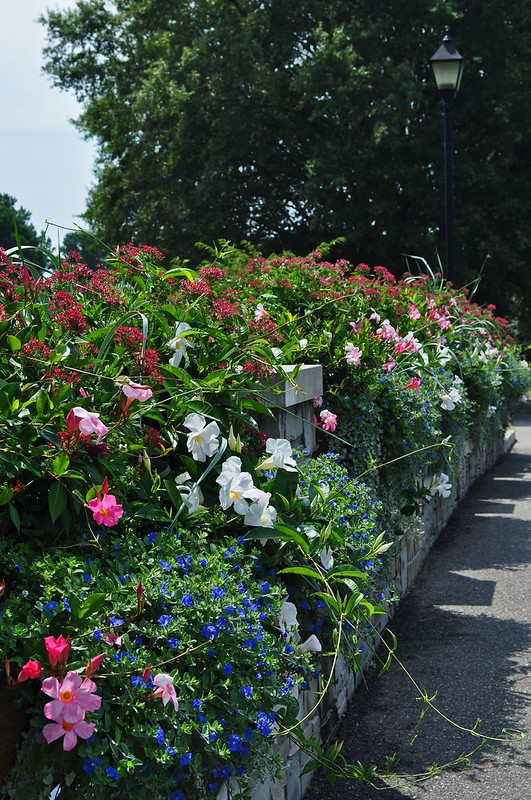 Rose Garden Bridge (6)