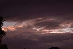 Flyingfox Sky