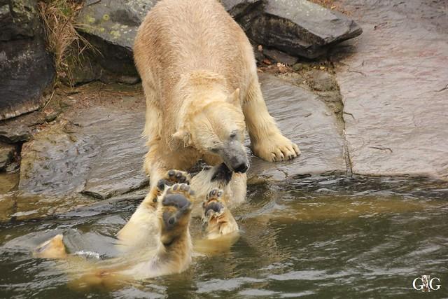 Nieselregen im Tierpark Friedrichsfelde 25.03.201641
