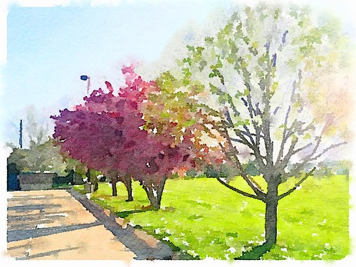 Spring has sprung. Beautiful blooming trees. #iowa #MyIowaHome #igmasters #photography #iphoneography #photooftheday #dsm #desmoines #trees #waterlogue #spring #springtime