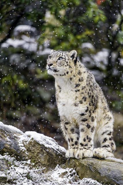 Djamila watching the snow fall