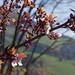 Primavera Sillian
