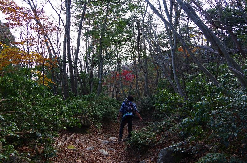 20141122-武奈ヶ岳(Saku)-0058.jpg