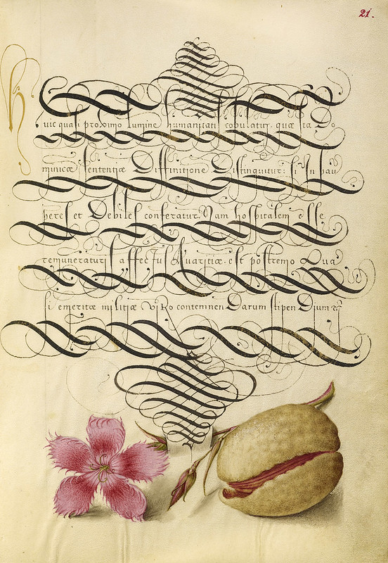 003- Fol 21- iluminado con clavel y almendra- Mira Calligrafhiae monumenta- Joris Hoefnagel- Getty Museum.
