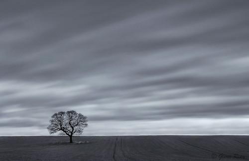 longexposure blackandwhite tree field mono movement pentax le k30 sigma1770hsm pentaxart glennreay