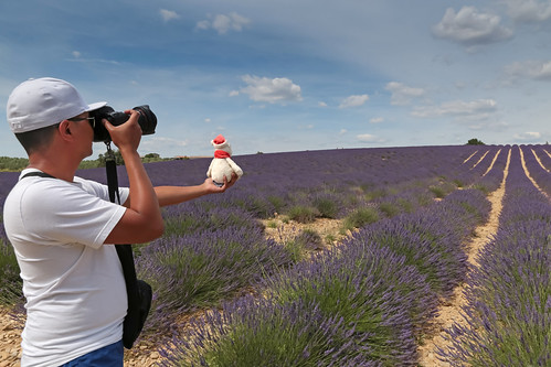 bear camera man france male field june canon photography europe photographer purple teddy violet lavender paca cap provence bloomingdales lavande champ homme ours ourson alpesdehauteprovence 2015 stewartleiwakabessy valensole meteorry provencealpescôtedazur provencealpescôted'azur plateaudevalensole mrbloomingdales misterbloomingdales