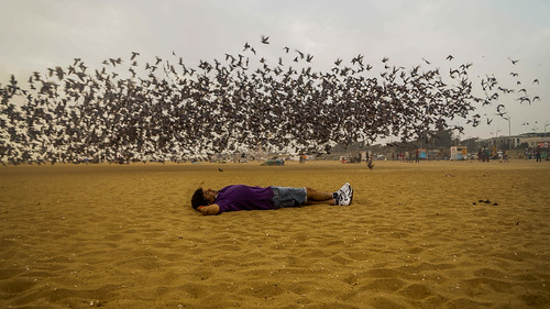 Peace and Pigeons