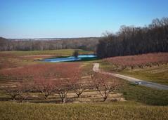Farm Ponds