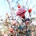 2016 Winter rose by shinichiro*