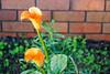 Flower by XPinger (Chris Sutton)