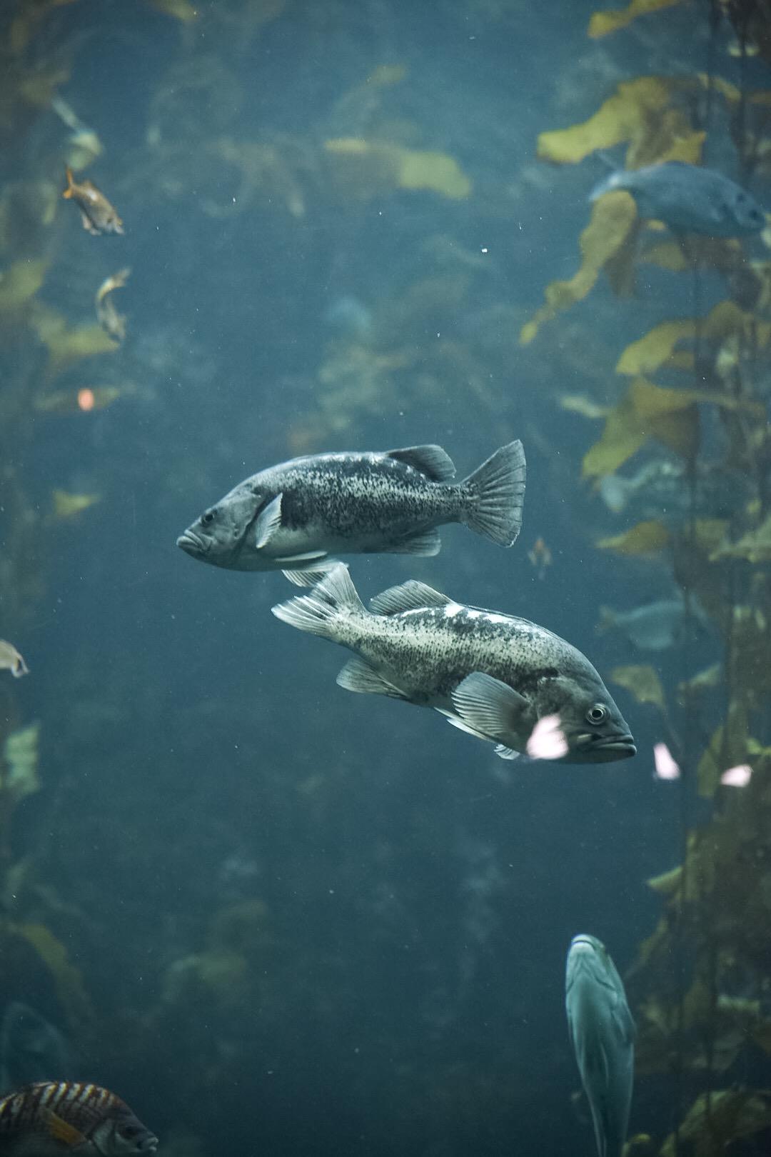 Monterrey Bay Aquarium