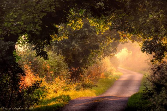 Soft Morning Light
