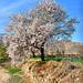 Happy Norouz - نوروز مبارک باد
