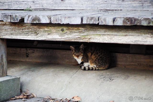 Today's Cat@2016-03-01