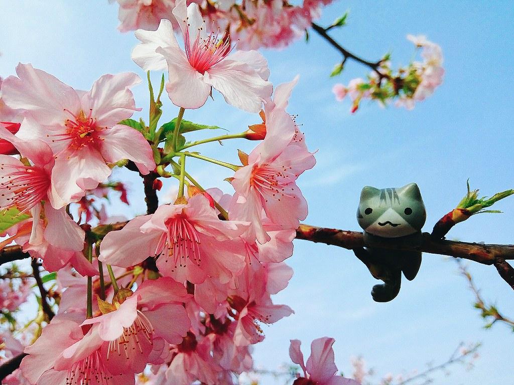 新竹玻璃工藝館麗池公園櫻花
