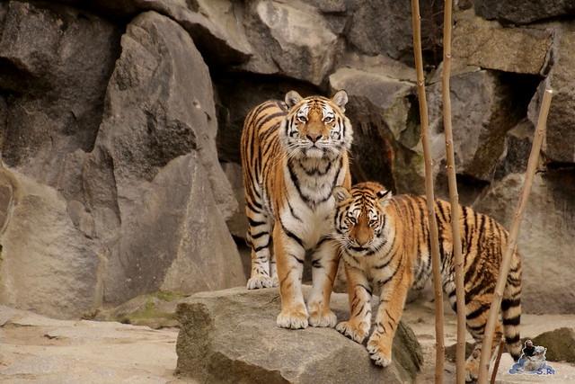 Tierpark Berlin 13.03.2016  0197