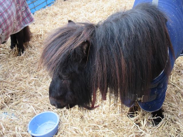 Remus pony IMG_4615