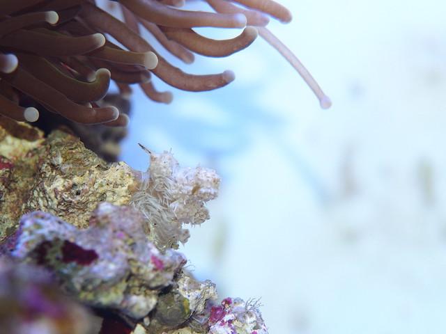 P4072689 水珊瑚