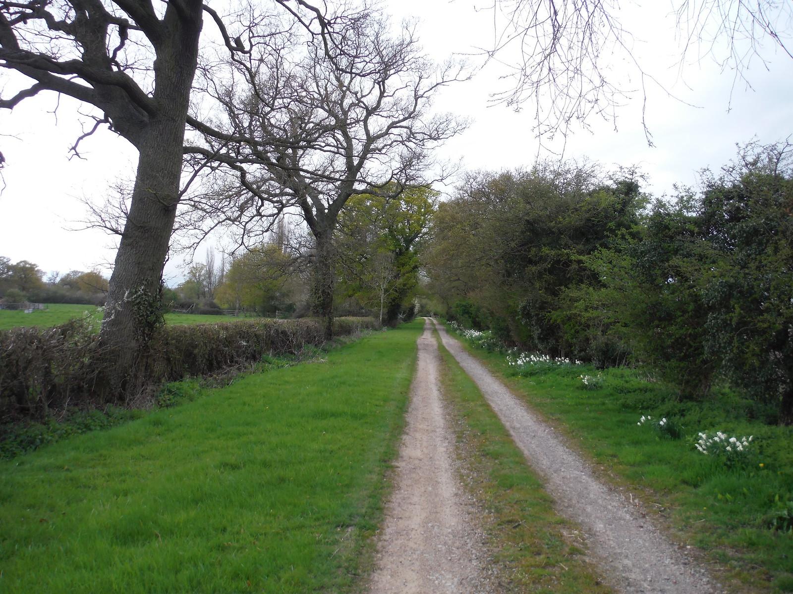 Track to Ladygrove Farm SWC Walk 44 - Didcot Circular