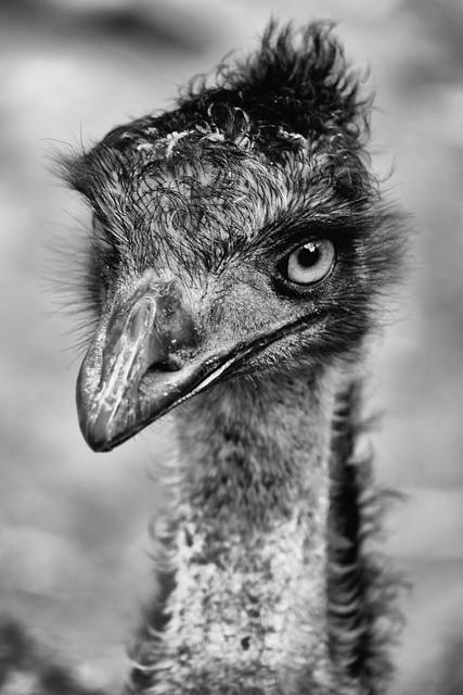 Emu textures.jpg