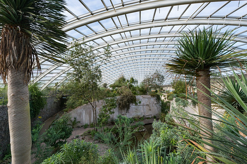 Inside the largest single span greenhouse in the world, National Botanic Garden of Wales, Llanarthne, Carmarthenshire, Wales