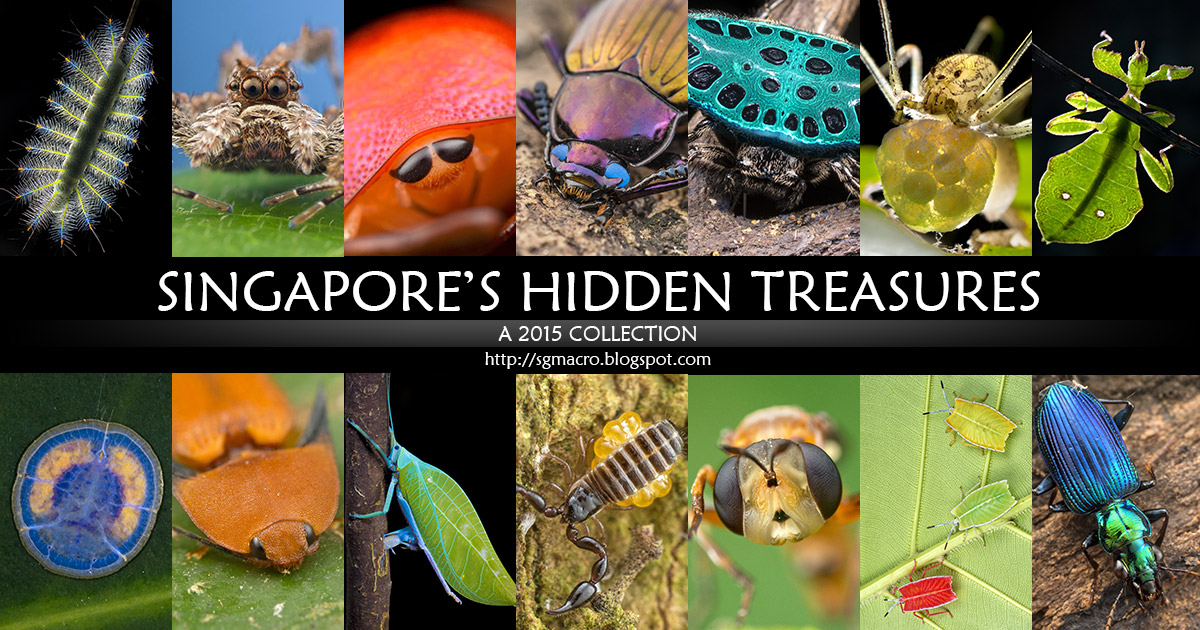 Singapore's Hidden Treasures - A 2015 Collection