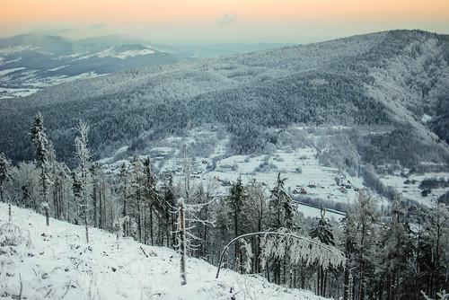 morning las trees winter white snow mountains grass forest sunrise island frozen woods meadow poland polska zima góry carpathians hala śnieg trawa drzewa łąka beskid karpaty wyspowy ćwilin beskids śnieżnica