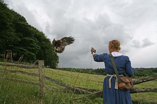 Georgian Falconry