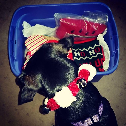 Penny says goodbye to Christmas 2015 - Lapdog Creations