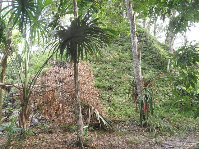 Piràmide encara enterrada, a Tikal.
