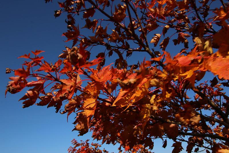 2014-09-28_00371_栗駒山.jpg