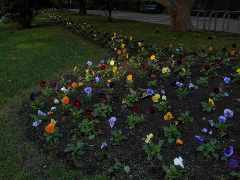 Flores con algo de luz