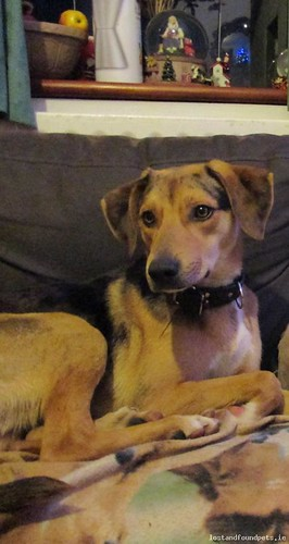 [See Comments Below] Thu, Feb 25th, 2016 Lost Male Dog - Drogheda Row, Kildare