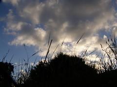 Οι πρώτες μέρες της φετινής Άνοιξης στην Ψίνθο