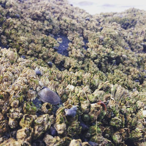 Millions of tiny sea creatures on Whidbey Island. #whidbey #seacreatures #pugetsound #washington