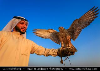 Kuwait - Kuwaiti Desert - Falcon and its falconer