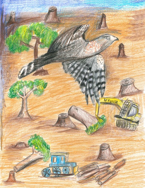 2016 Saving Endangered Species Youth Art Contest K-2