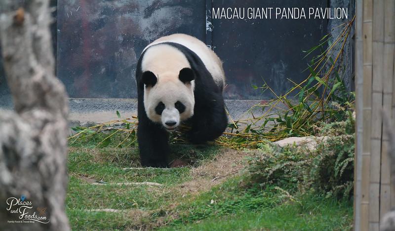 macau gian panda pavilion