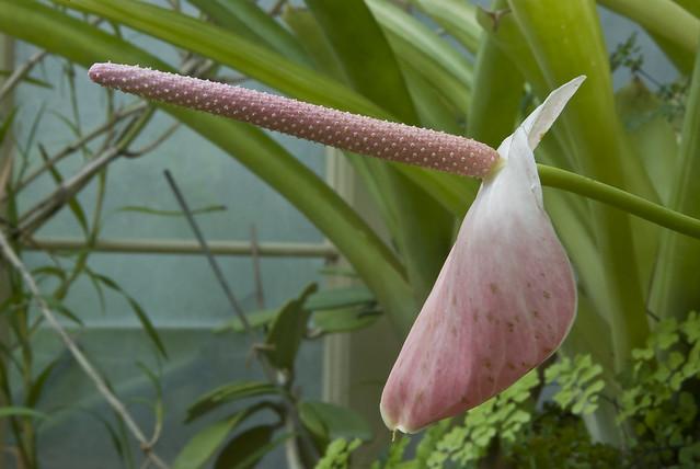 10041608 Botanic Gardens-Dublin