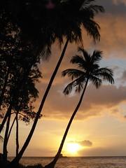 Sunshine Martinique