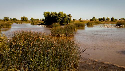llano seco wetlands