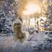 frosty morning by aleshurik