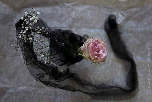 La danza della rosa