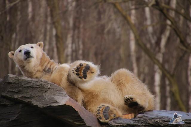 Tierpark Berlin 24.02.2016   9