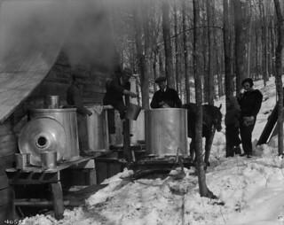Gathering maple sap / Collecte de la sève d'érable