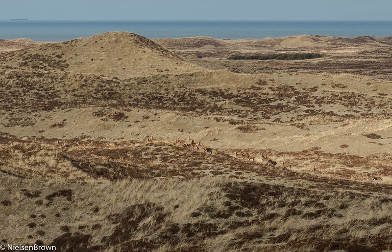 Deer, dunes and ship