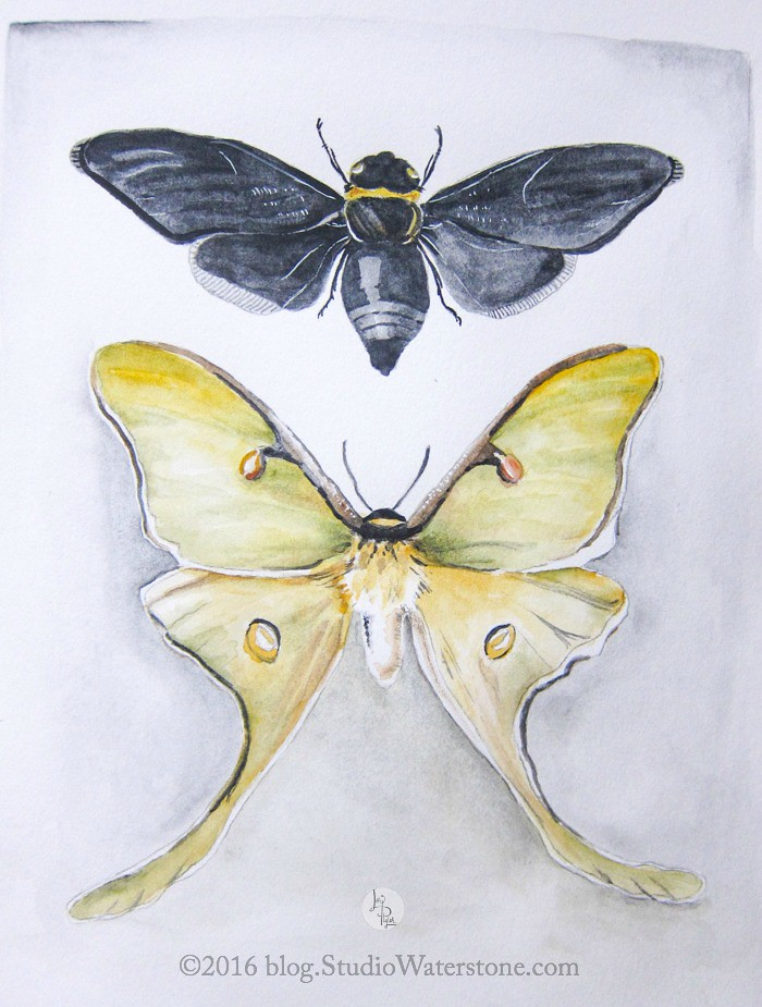 Sketchbook: Butterflies & Bees