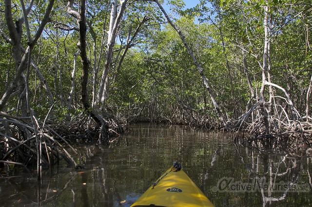 view 0001 Everglades, Florida, USA
